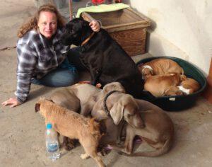 Tierpsychologin Imke Arracher animals-in-harmony Erfahrungen Hunde
