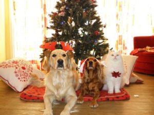 Tierpsychologin Imke Arracher animals-in-harmony Foto Wettbewerb Adventskalender Hund Katze Tier Haustier