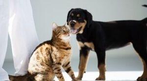 Praktika Praktikum Tierarzt Katze Hund Imke Arracher animals-in-harmony Erfahrungen